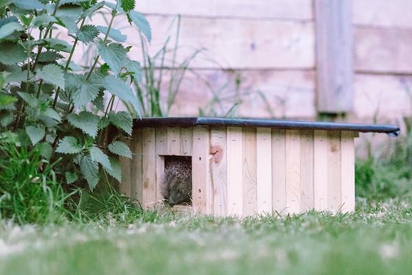 Hedgehog Release