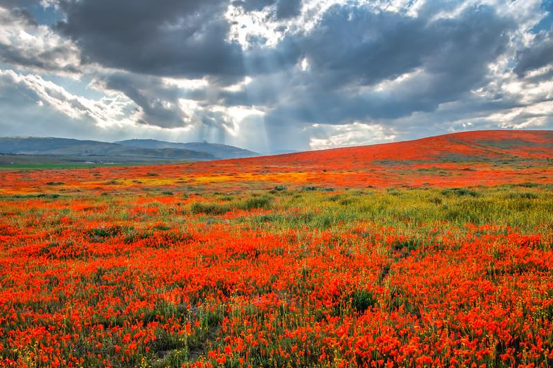 Poppy Reserve Spring Symphony #2 Antelope Valley Poppy Reserve Spring Storm God Rays Wild Flowers Super Bloom Fine Art Landscape Nature Photography!    California Wildflowers Superbloom!  Elliot McGucken Fine Art Landscape Nature Photography & Luxury Wall Art