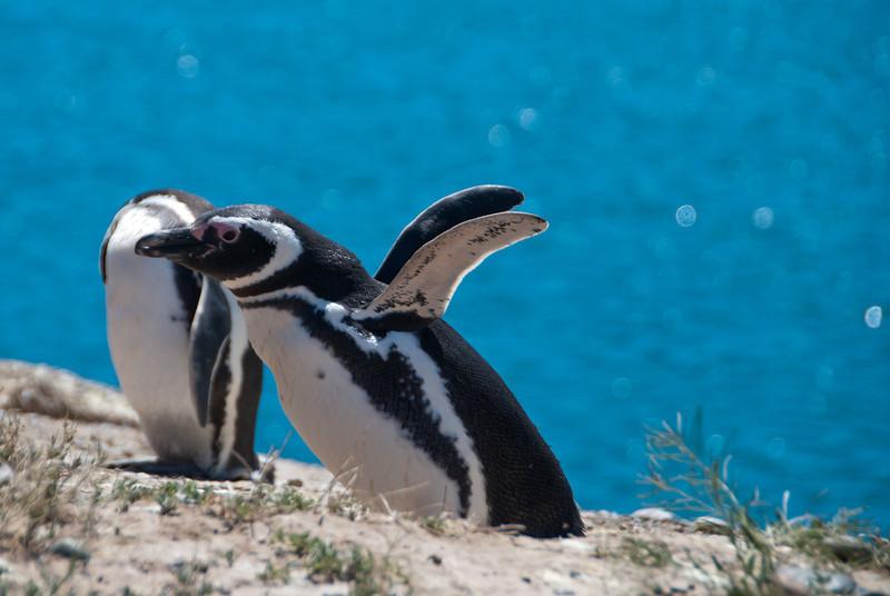 Puerto Madryn 201111 Valdes 206.jpg