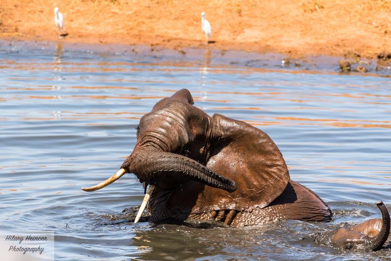 Kenya Wildlife-17.jpg