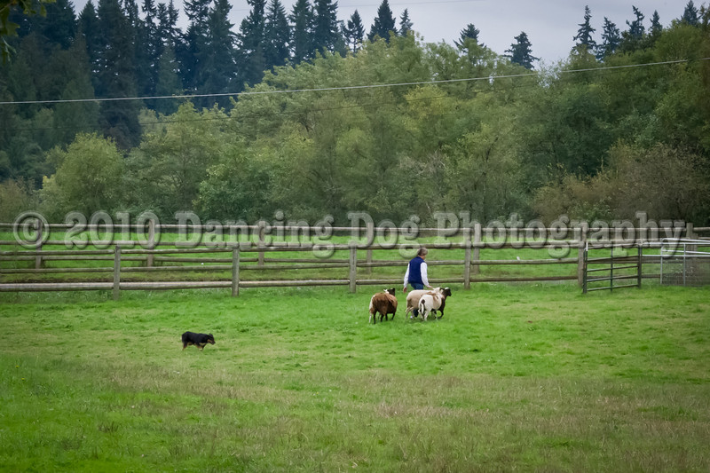 PacNW_HT_Sun_Sheep-6767