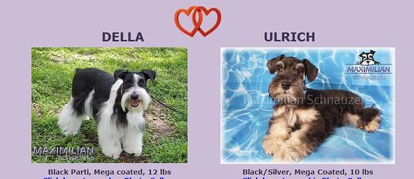 Della & Ulrich Puppies, DOB 4/26/2020