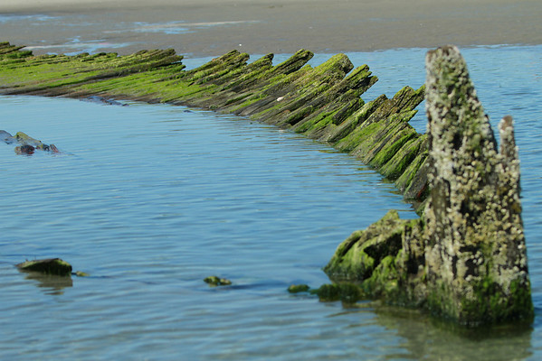 Higgins Beach - Landscapes