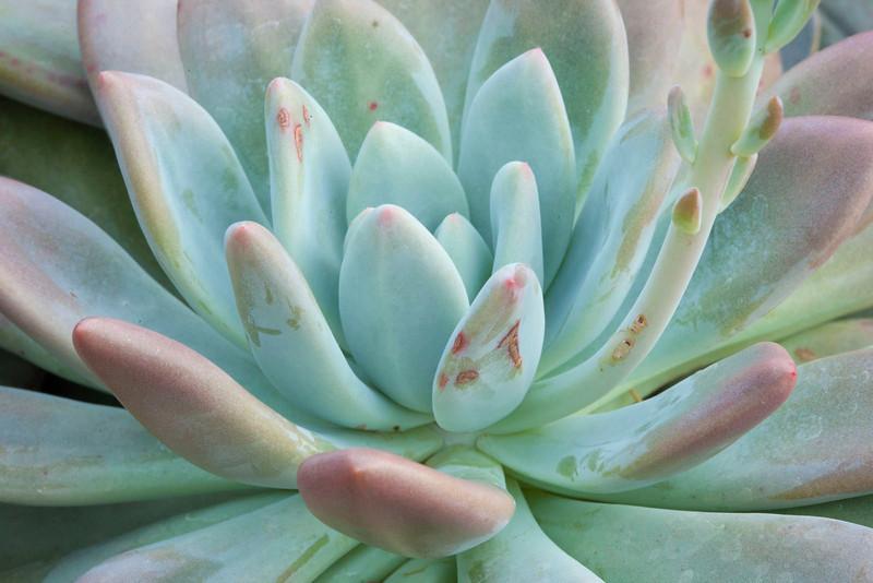 Cactus-9621 corrshrp copy.jpg