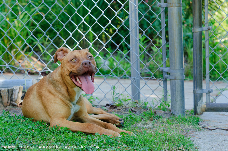 20110702 Shelter Photos-137.jpg