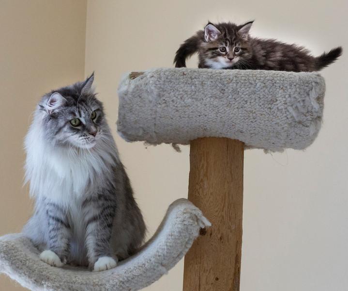 Kittens242.jpg