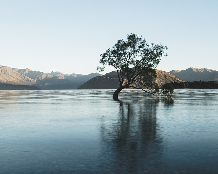 That Wanaka Tree Soho-1.jpg