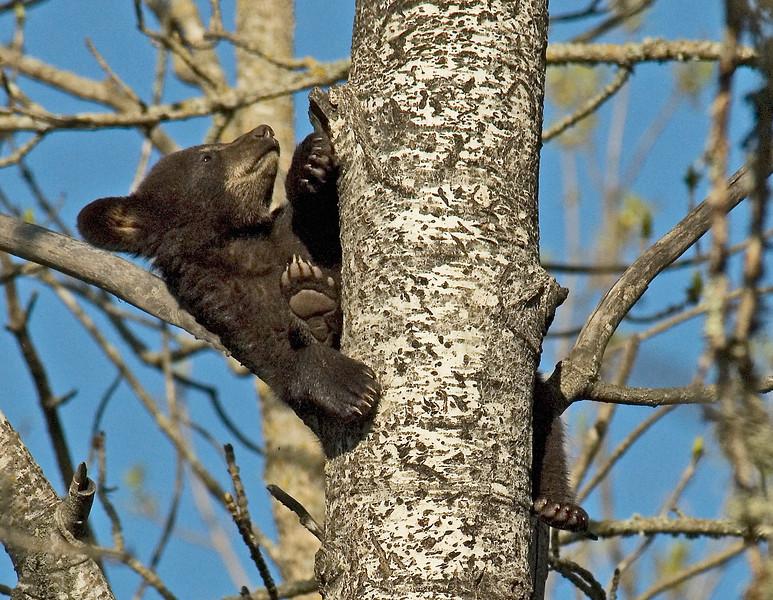 Bear Cubs-13.jpg