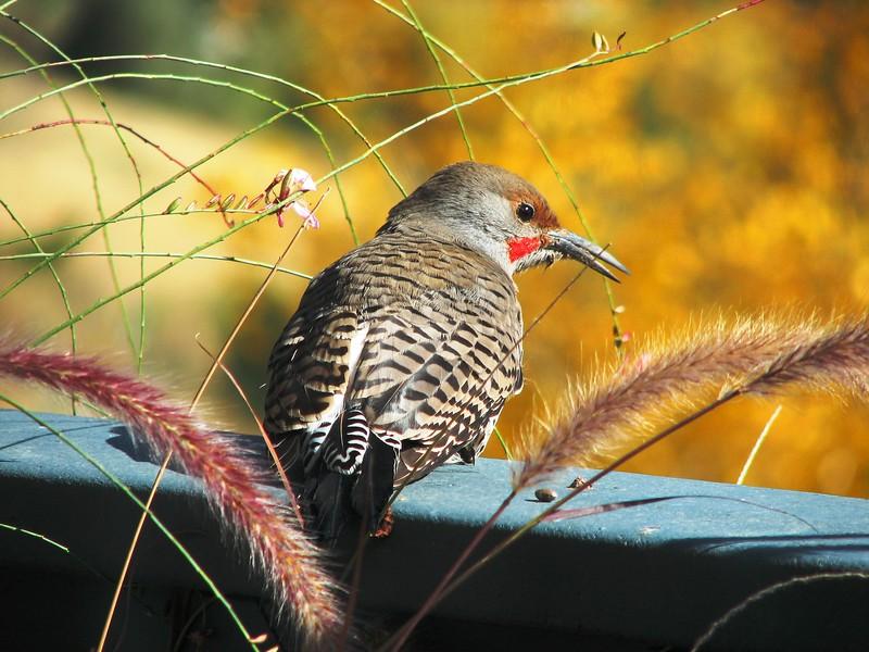 birds (150).jpg