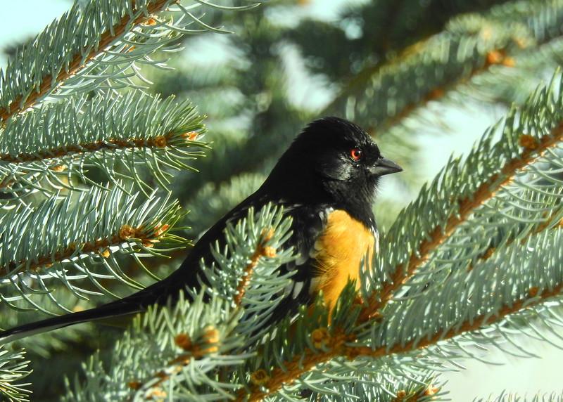 birds (206).JPG