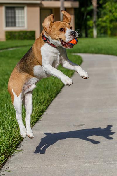 Beagle Workout