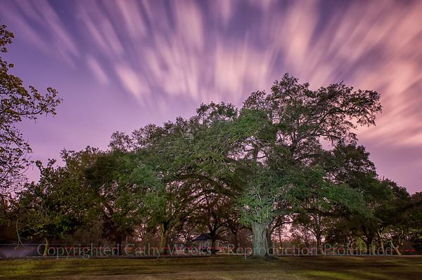 Audubon Park @ Night 2012
