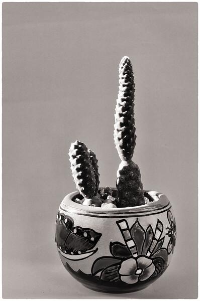 cactus in a pot 061220-.jpg