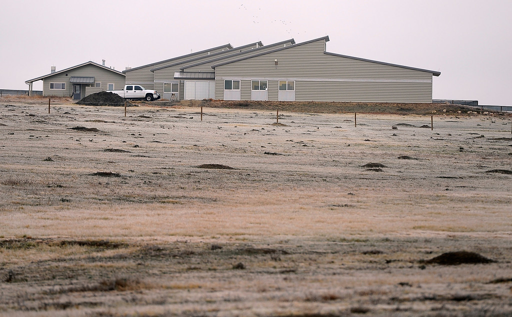 . WELLINGTON, CO - Oct. 29: The U.S government through the U.S. Fish and Wildlife Service is breeding the black-footed ferret in captivity in northern Colorado. Restoring the ferrets, an endangered species, to the United State prairies is considered a key step in to reviving dying ecosystems. (Photo By Kathryn Scott Osler/The Denver Post)