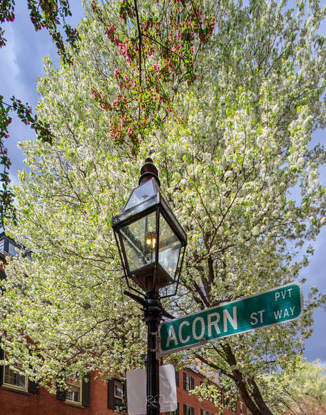 2019_04_Boston esplanade20190427-_A5A6044_Luminar2018-edit.jpg