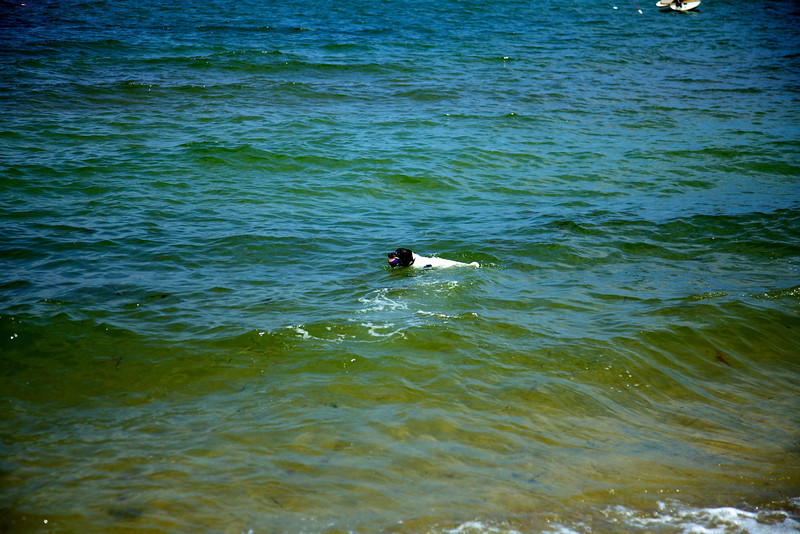 Cape Cod 2011 67.jpg