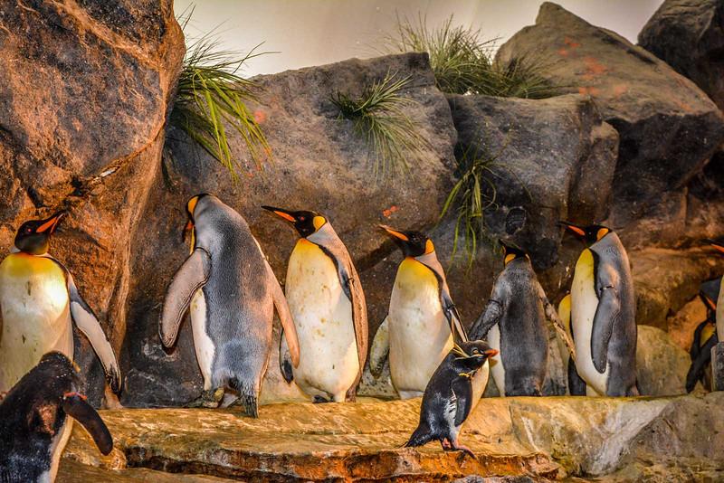 st louis zoo forest park