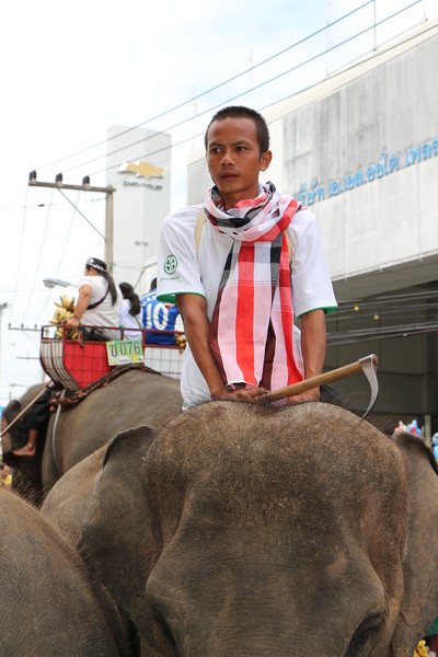2014-11-14 Surin Elephant Welcome Feast 319.JPG