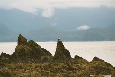 Juneau Wildlife Tour