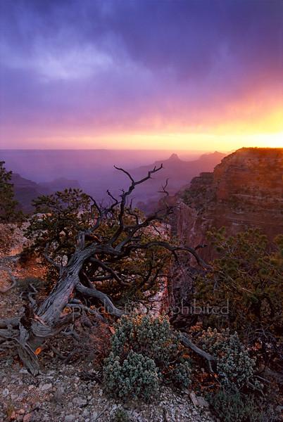 Rite Of Spring North Rim Grand Canyon, AZ