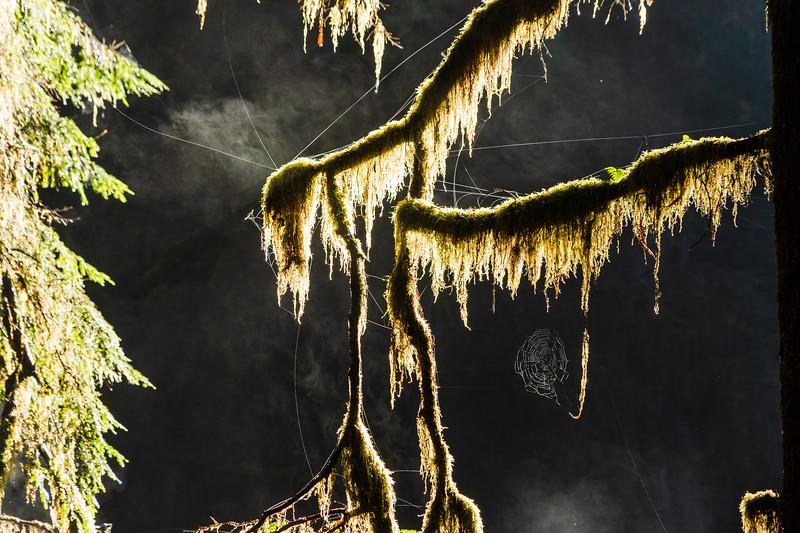 19-12-31 redwoods 0012-402.jpg