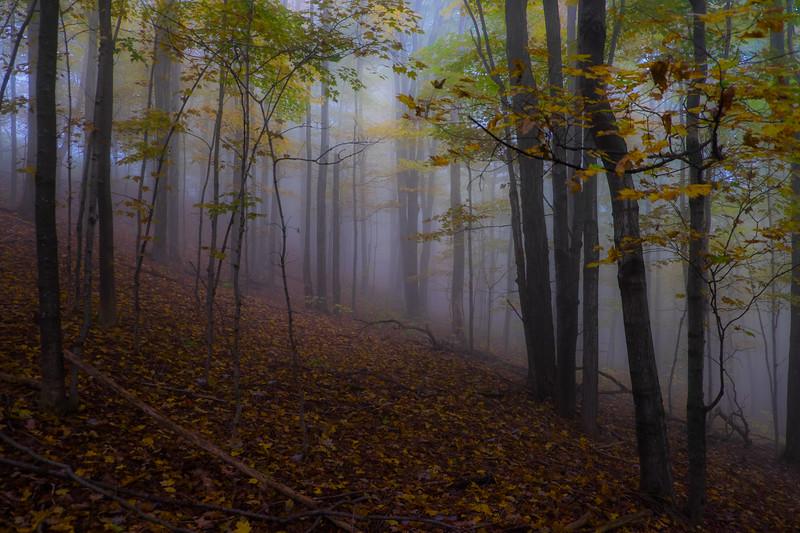 Widehill Mist