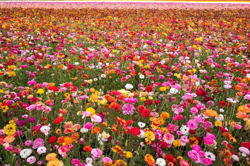 Spring Flowers A-229.jpg
