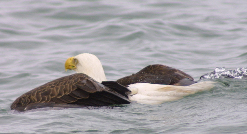 eagles from disc 028.jpg