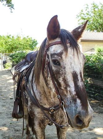 Roxie's Horse