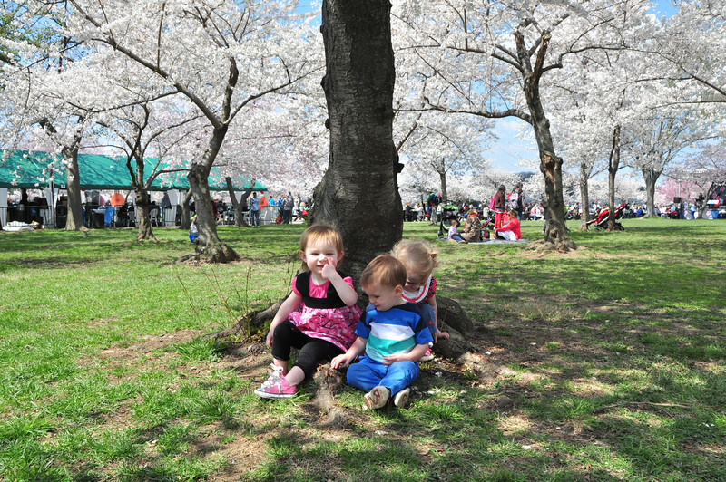 Cherry Blossoms 2014 097.jpg