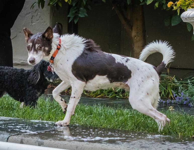 dogs-5-2.jpg