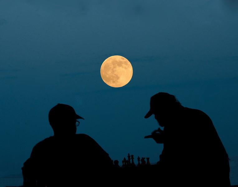 Chess player by moonlight14x11DSC_3800.jpg