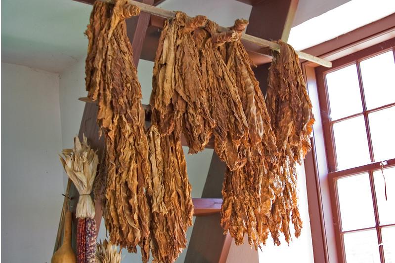 Drying Tobacco.jpg