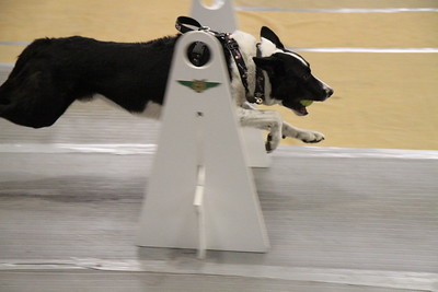Flyball MAINEia 2017