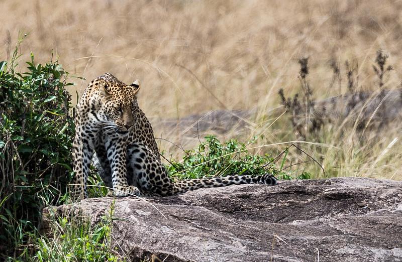 Kenya038.jpg