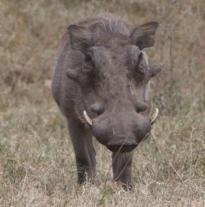 Africa Safari 2008-2009