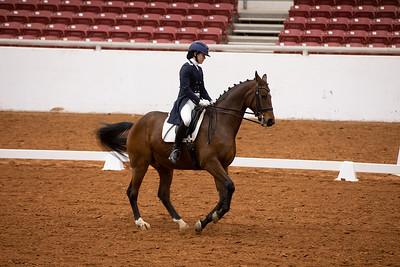 Horse 113