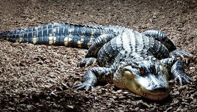 Crocodile ride, 21 Apr 2019