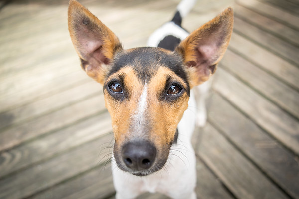 Longacres Animal Haven Pups