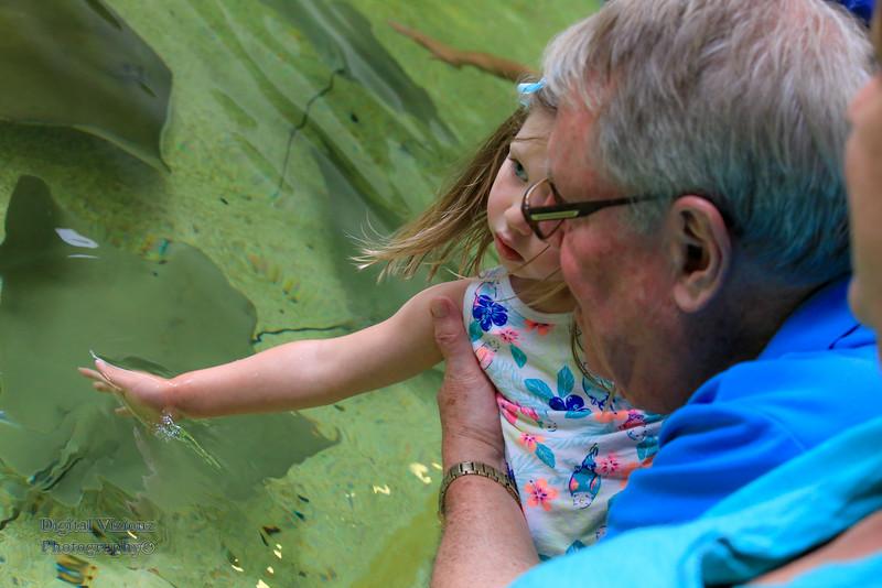 2016-07-17 Fort Wayne Zoo 816LR.jpg