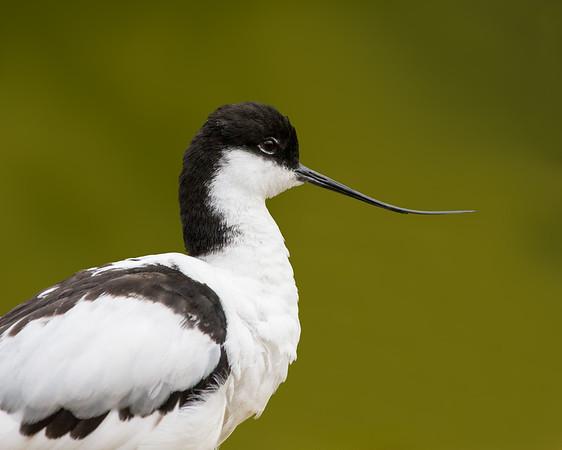 UK Birds Stock Photos