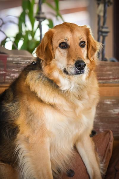 Deb's Pup