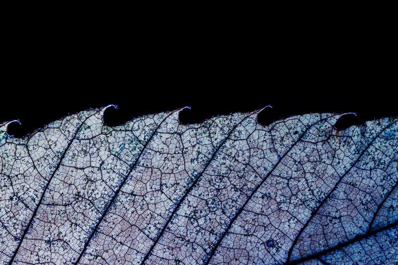 Leaf waves.jpg