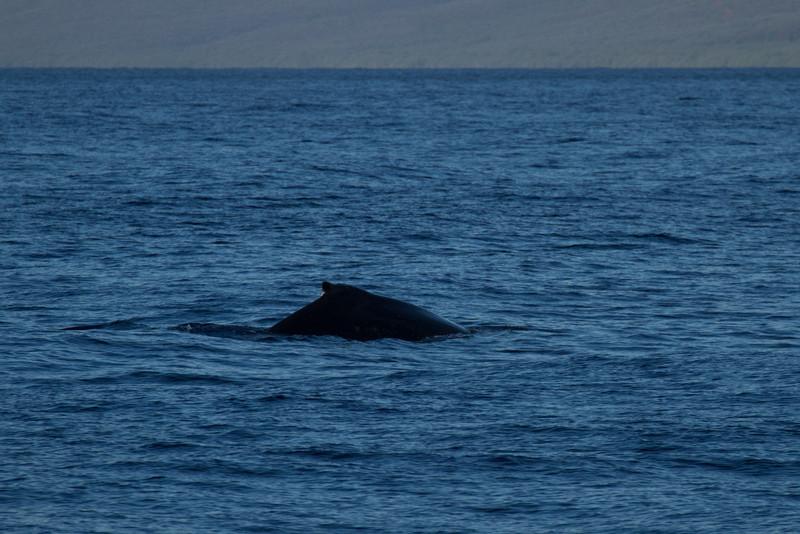 Hawaii2012-670.jpg