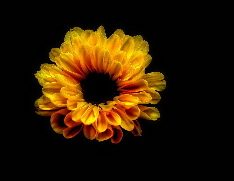 Yellow Gold Flower