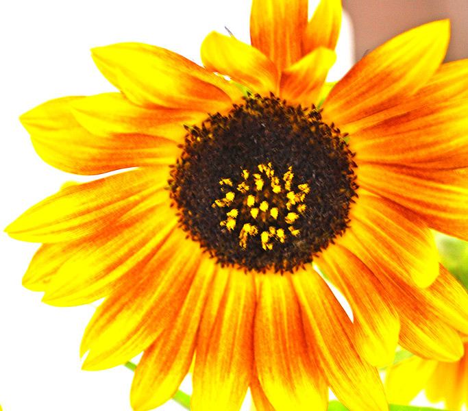 to seed 9-21-2012.jpg