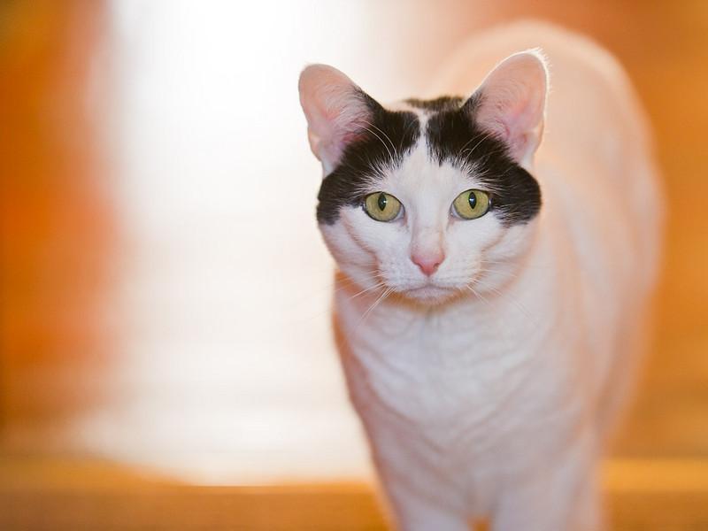 100410_Nat's-Cats_08