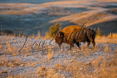 32715 Bison