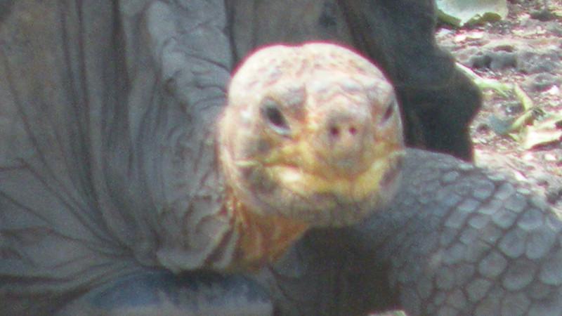 Galapagos3 170.JPG