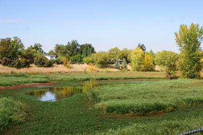 West Area Pond